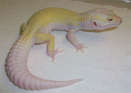 Mack Snow Murphy Patternless Tremper Albino