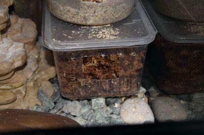 Камера влажности из пищевого контейнера