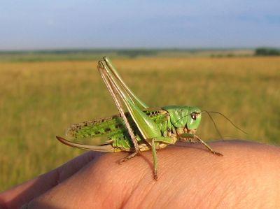 Живые природные корма для рептилий