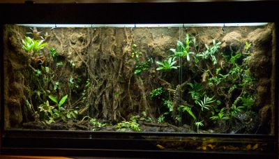 Искусственные коряги для тропического террариума